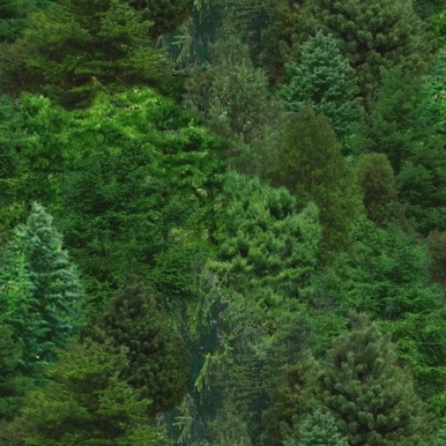 Forrest - Green