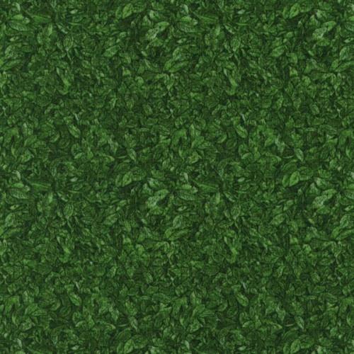 Danscapes-green leaves