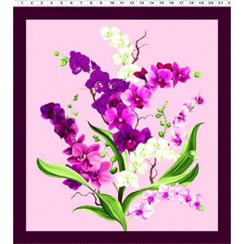 Orchid Fancy